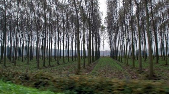 Congreso aprueba Ley de incentivos económicos para plantaciones forestales