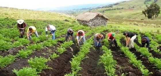 El sector agropecuario creció 4.2% en octubre, informó el Minagri