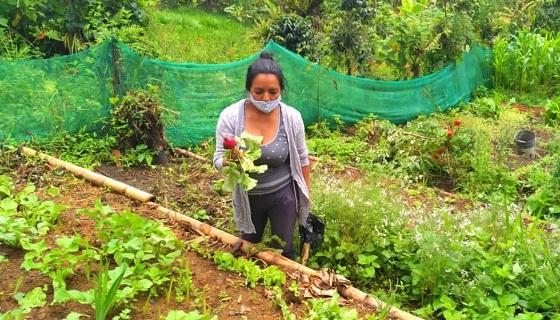 Gobierno Regional instaló 431 biohuertos para mejorar nutrición de la población